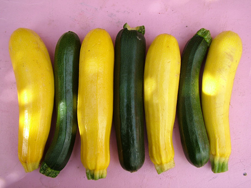 Goldena and Best of British courgettes (500)