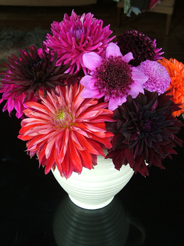 Dahlias against black background (500)