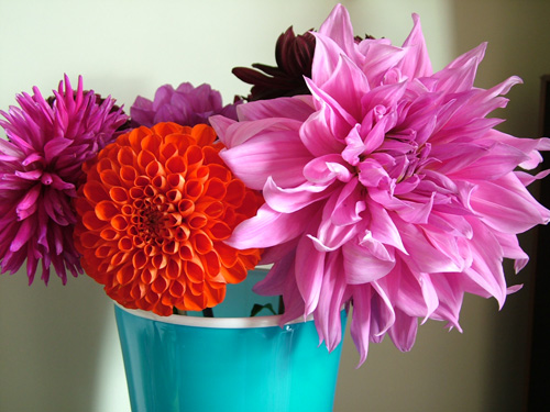 Dahlias in blue vase (500)