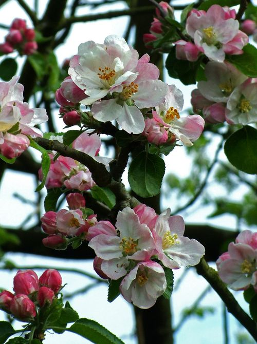 Beautiful blossom cropped
