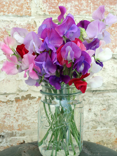 Spring And Summer 2010 Sweet Peas In Jam Jar