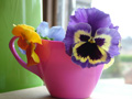 Pansies_in_pink_jug_for_growing_pag