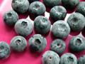 Blueberries_120_2