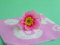 Pink_primrose_on_pink_napkin_120
