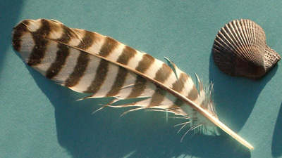 Gull_feather_400